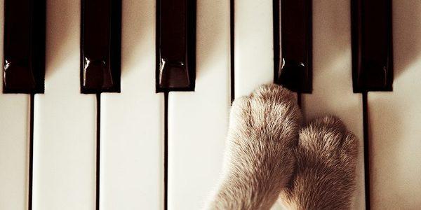 音楽教室でより音楽を楽しむなら!発表会をする音楽教室がおすすめ